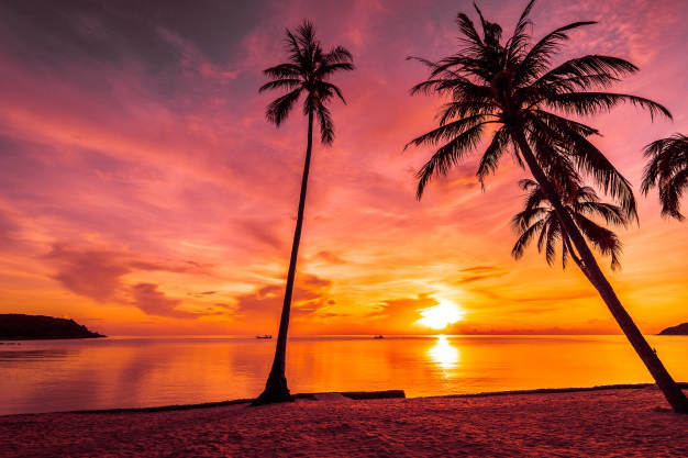 At sunset time on the tropical beach and sea with coconut palm tree
